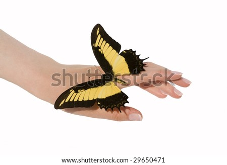 Woman's hands with beautiful butterfly - stock photo