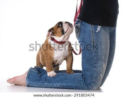 woman's legs with puppy at her feet - bulldog - stock photo