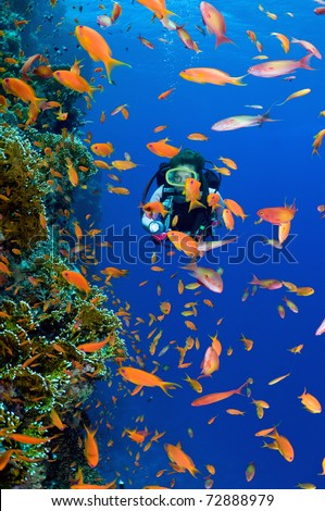 Woman scuba diver exploring soft corals - a series of UNDERWATER IMAGES. - stock photo