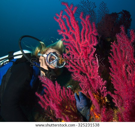 Woman scuba diver observes a moray on a coral reef  Fotka::   Woman Scuba Diver observes a moray on a coral reef   - stock photo