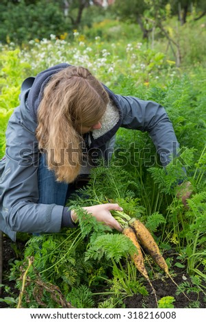 Woman searching for fresh carrots at the allotment - stock photo