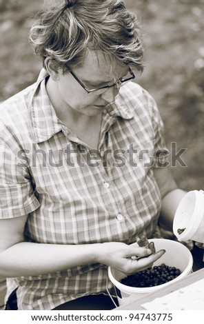 Woman selecting blueberries, dyed black and white photo. - stock photo