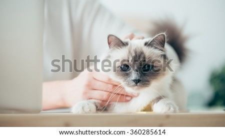 Woman sitting at desk and caressing her beautiful cat, togetherness and pet care concept - stock photo
