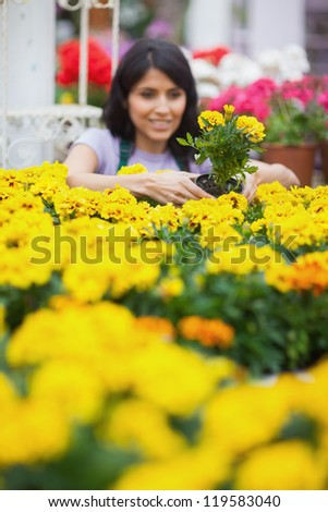 Woman taking a yellow plant and planting in the patch - stock photo