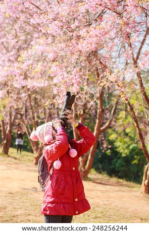 woman traveler take a photo and enjoying in cherry blossom garden, chiang mai. - stock photo
