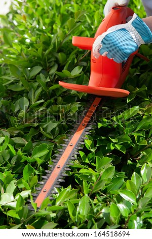 Woman trimming bushes in her backyard using an electrical hedge trimmer.  - stock photo
