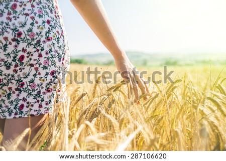 Woman walking in a wheat field - Hand of a young girl touching corn ears in a field at sunset - stock photo