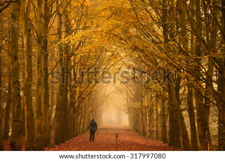 Woman walking with her dogs on a path through the beech trees in a forest in autumn colors with fallen leaves on the ground and on a foggy fall sunday morning.
