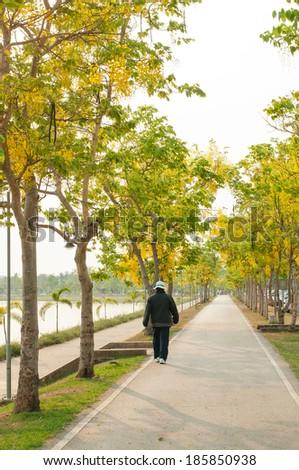 Woman walks through golden shower tree on a park - stock photo