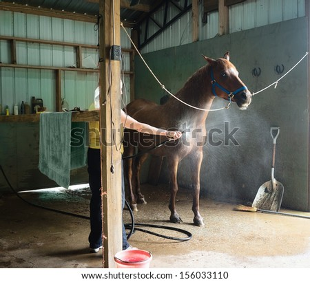 Woman washing a chestnut gelding horse in a barn. - stock photo