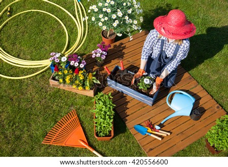 Woman wearing gloves, straw hat and wellington boots potting osteospermum flowers. Gardening concept.