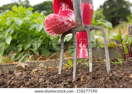 Woman wearing red rubber boots working in the garden with a pitch fork - stock photo