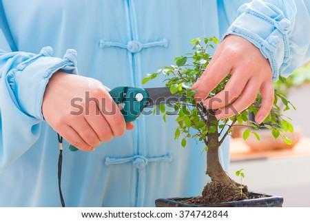 Woman wearing traditional chinese uniform trimming bonsai tree - stock photo