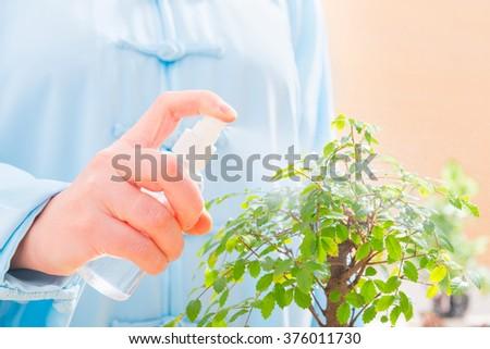 Woman wearing traditional chinese uniform watering bonsai tree - stock photo