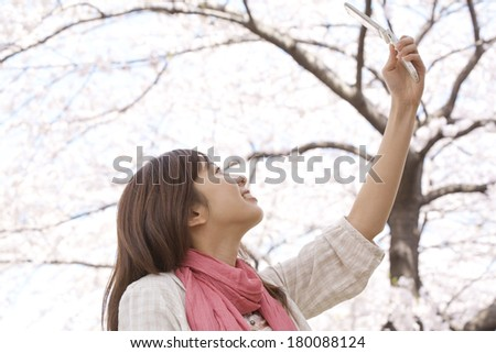 woman who takes a photo of a cherry tree