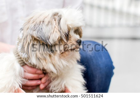 Woman with a small dog and paper bags