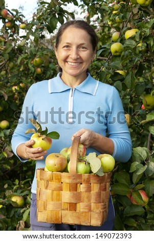 woman with  basket of apples in  garden.