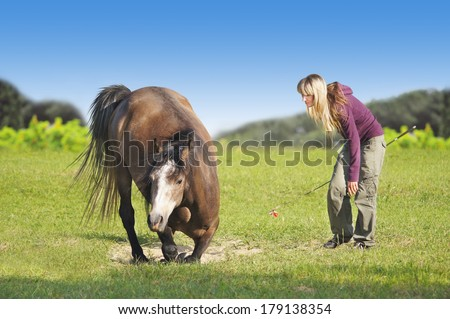 Woman with blond hair lays horse on green field - stock photo