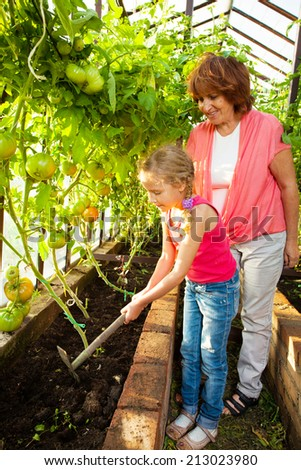 Woman with child grows harvest in the hothouse. Senior with tomatoes - stock photo