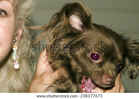 Woman with Pet Chihuahua