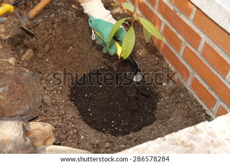 Woman working at her garden, planting a sprout. - stock photo