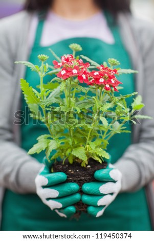 Woman working in garden center holding plant out of it pot - stock photo