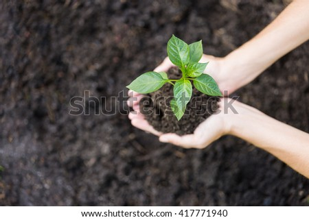 Woman working in garden, planting a sprout - stock photo