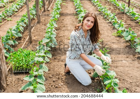 Woman working in greenhouse with cucumber plants. - stock photo