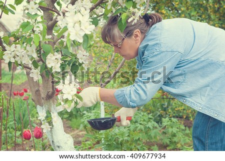 Woman working in her garden. Care tree after winter. tree from harmful insects.