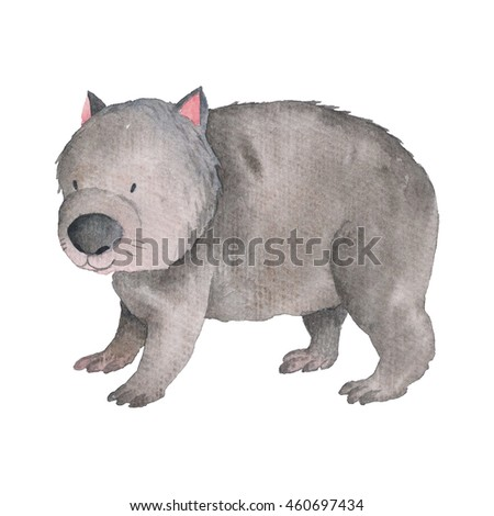 Wombat Animal Australian Animals Watercolor Illustration Painting Hand-drawn Isolated