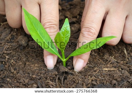 Women are planting trees to increase with ozone and global warming.close up - stock photo