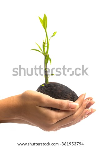 Women hand hold young othalanga sprout seed and leaf on white background