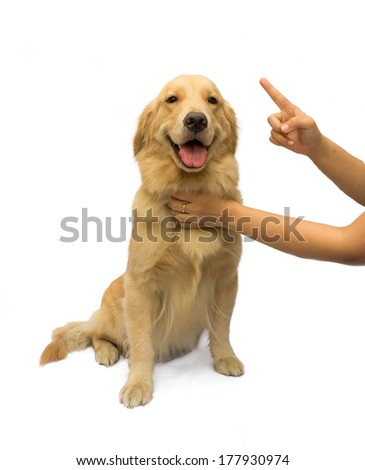 women hand trying to training golden retriever isolated in white background with clipping path