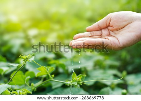 women hand watering young plants in sunshine on green background - stock photo