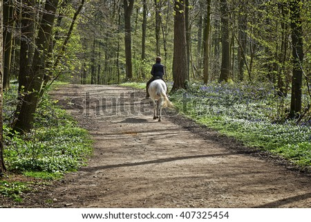 Women horseback riding in the forest, Halle, Belgium - stock photo