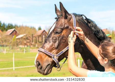 Women owner harnessing the stallion. Multicolored summertime outdoors horizontal image.