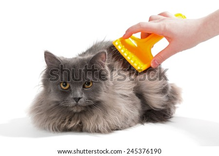 Women's hand brushed  fluffy cat, isolated on white  - stock photo