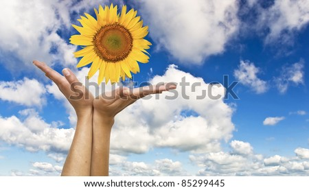 Women's hands with a sunflower on background of blue clear sky. Symbol of nature and concern.