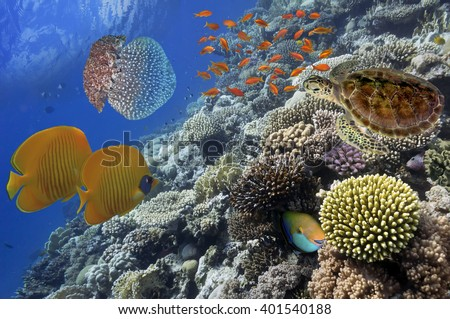 Wonderful and beautiful underwater world with corals and tropical fish - stock photo