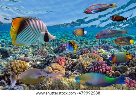 Wonderful and beautiful underwater world with corals and tropical fish. Beautiful fishes in water tank. Close up tropical fish underwater