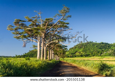 Wonderful avenue of trees in the interior of Nosy Be island, Madagascar - stock photo