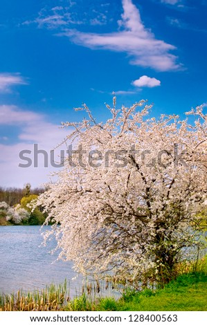 Wonderful  blossoming tree and splendid lake early morning by spring.