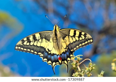 wonderful butterfly in nature - Eastern Tiger Swallowtail