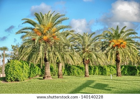 Wonderful colors of Florida, USA. - stock photo
