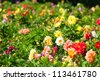 Wonderful Field with flowers in different colors in the park, Moscow, Russia - stock photo