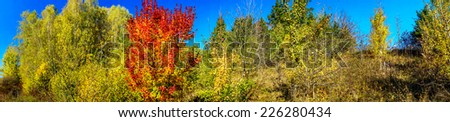 Wonderful golden autumn in the nice copse.  - stock photo
