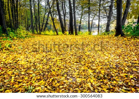 Wonderful golden grove near the lake.