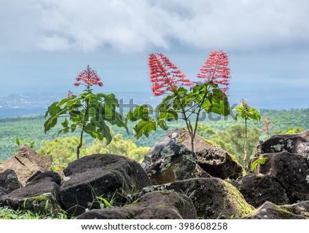 vegetation name in english to odia
