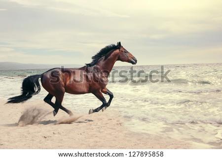 wonderful marine landscape with beautiful bay horse - stock photo