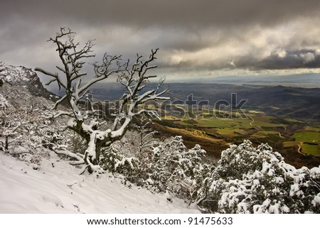 Wonderful old oak in the snow - stock photo